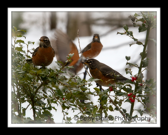 0992 Robins Feb 2014
