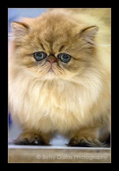 4059_CFA World Cat Show 2014