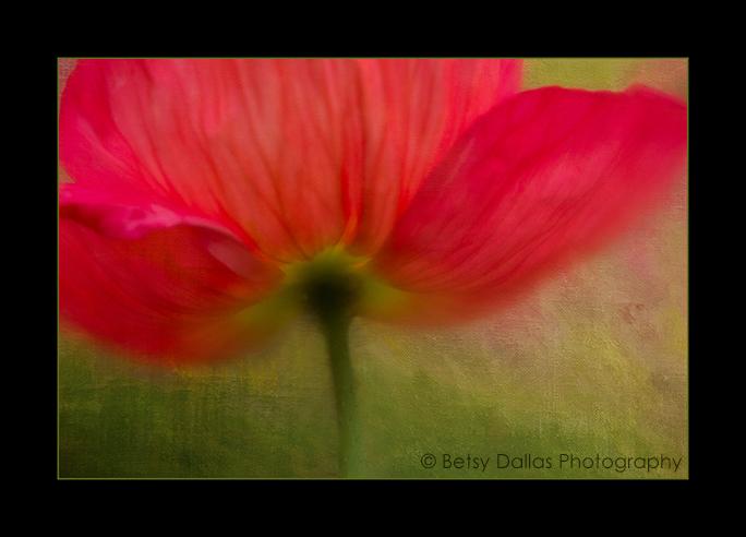 9378_Poppy2015