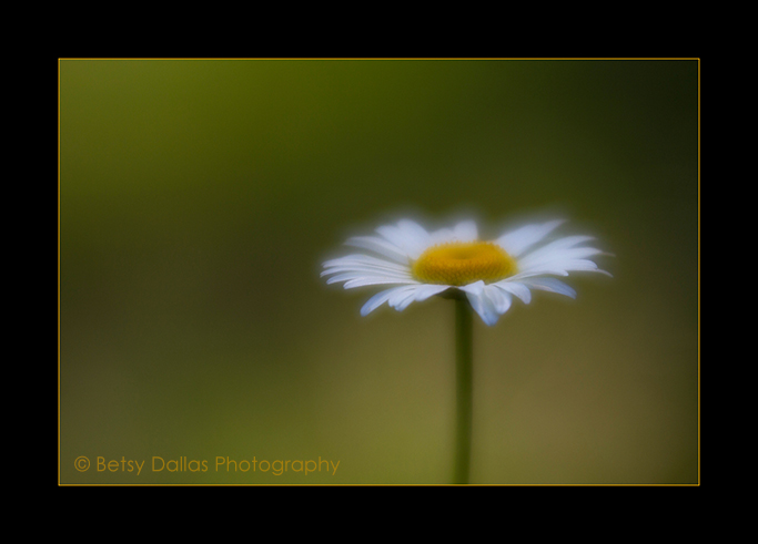 9725_Daisy2015